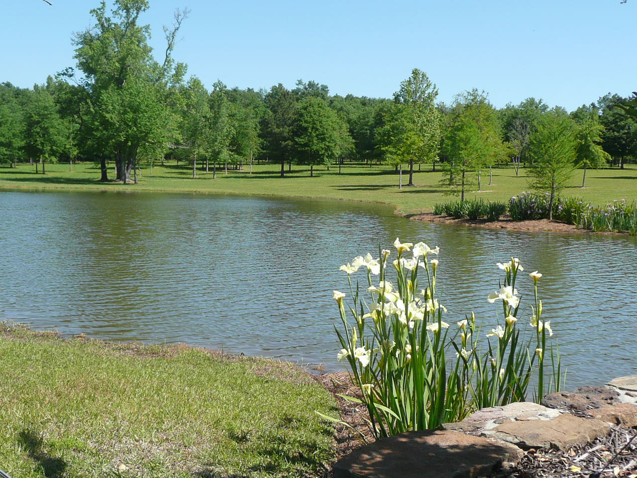 Use best practices in maintaining your landscape lsu for Pond landscape