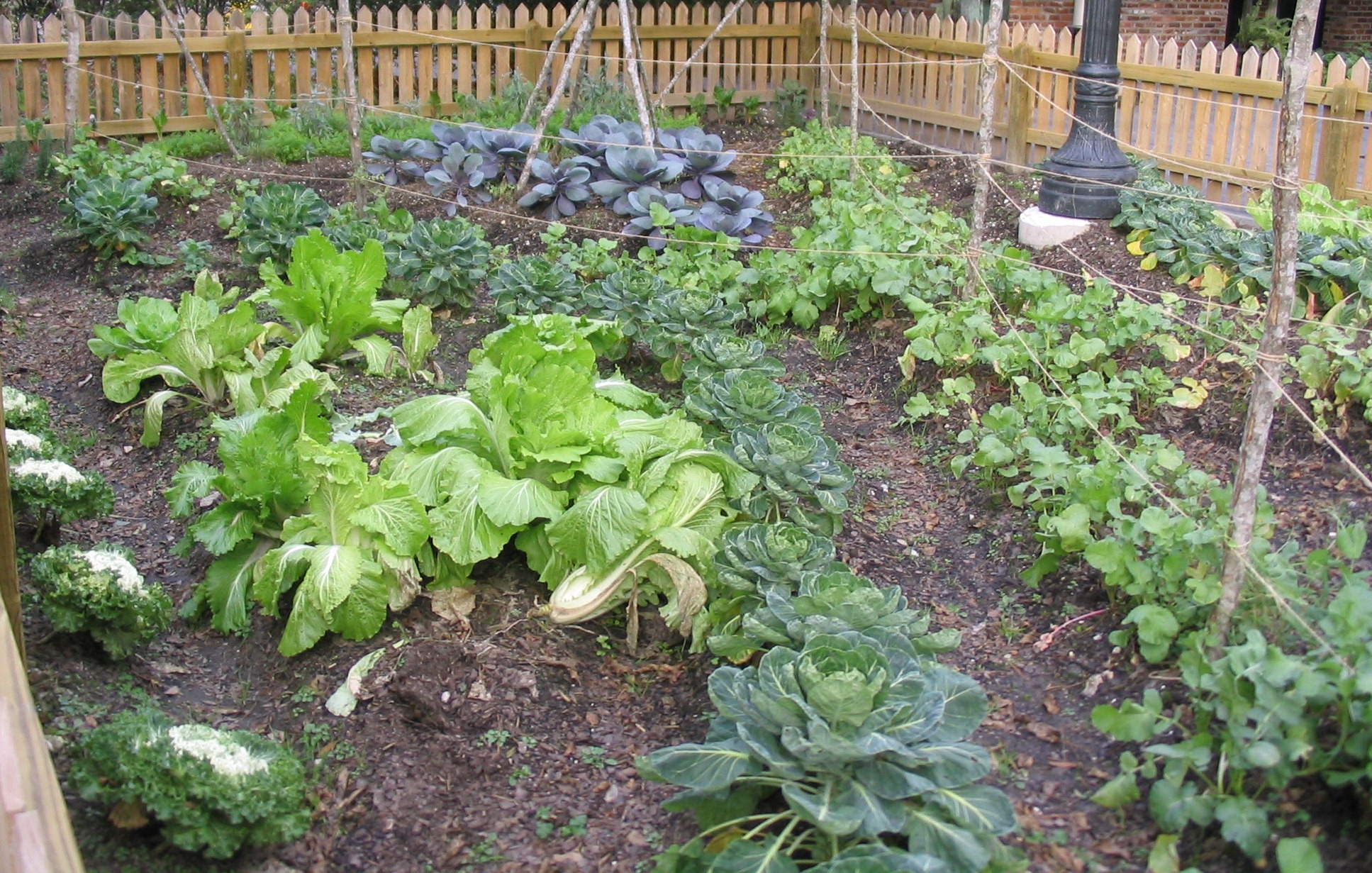 Tips for starting a home vegetable garden lsu agcenter for Vegetable garden