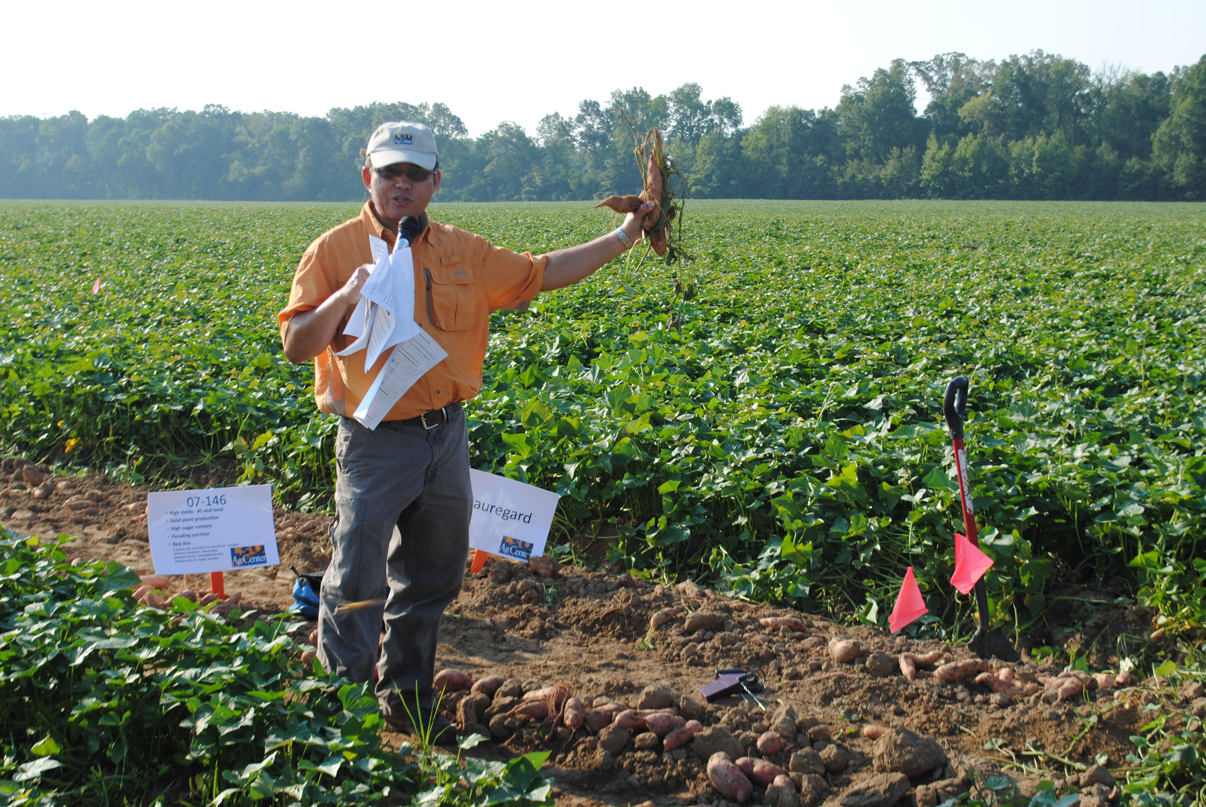 Sweet Potato Growers Learn Latest At Lsu Agcenter Field Day