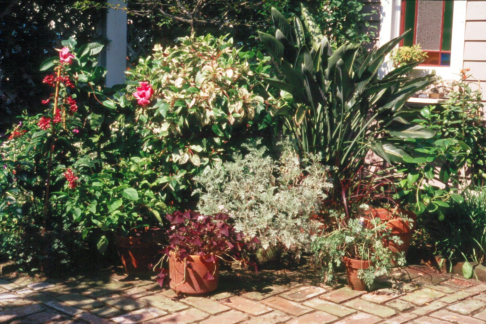 Outside plants in pots need special care lsu agcenter for Outside plants and shrubs