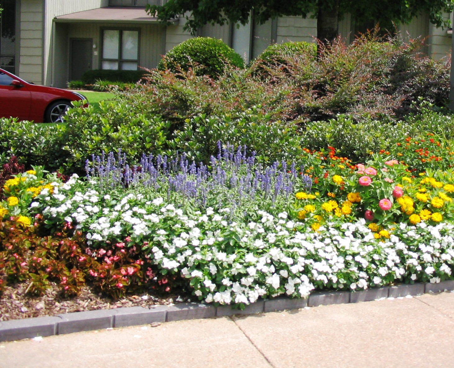 Plants for spring and summer - Summer Bedding Plants