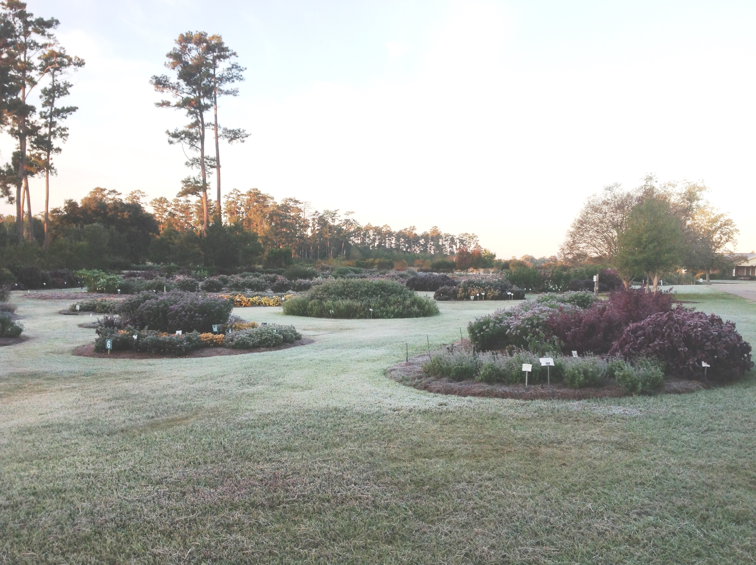 protect tender plants from winter freezes lsu agcenter