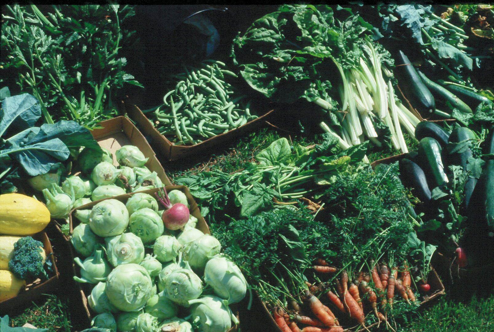 Tips for starting a home vegetable garden - LSU AgCenter